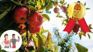 Bästa Äppelcidervinäger 2021 - Bäst i Test & Fakta